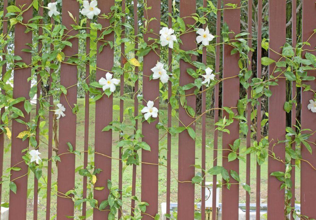 richardson-fence-pros-fence-staining-and-painting-1_orig
